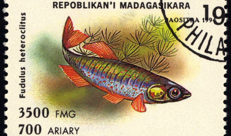 A stamp from Madagascar showing a mummichog fish.
