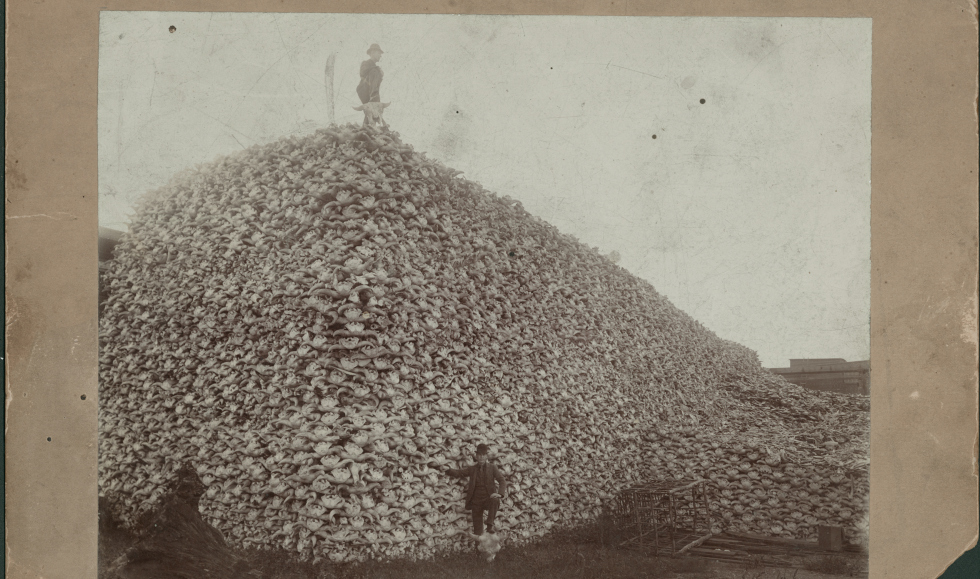A very old photo. A man stands on the top of a large mountain of buffal skulls Another man stands in front with his foot on a buffalo skull.