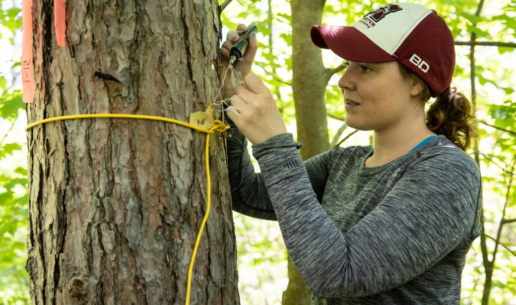 Alanna Bodo is using a hand-held tool to do something with a sensor on a tree trunk.